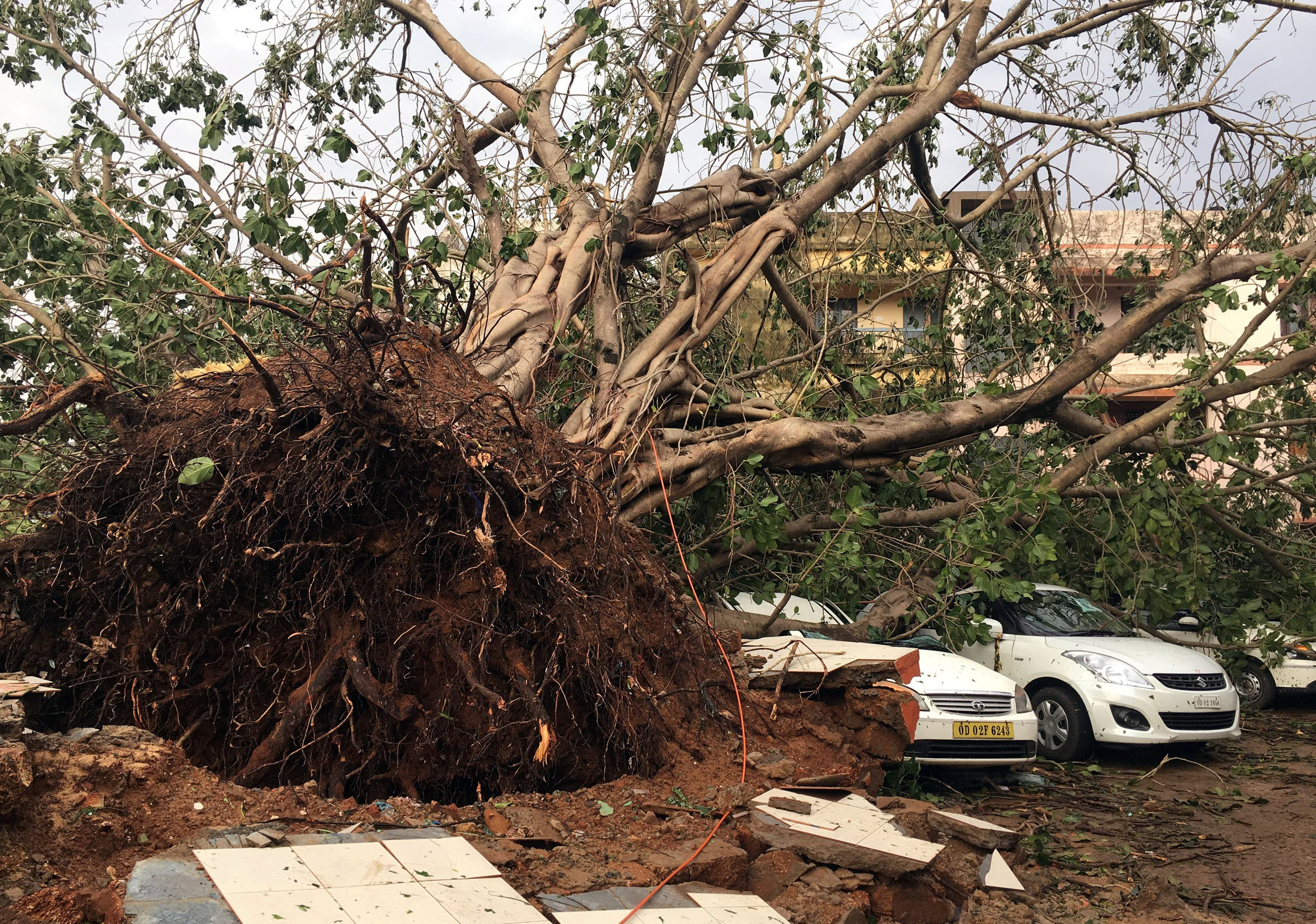 Cars are damaged by an uprooted tree in a residential area following Cyclone Fani in Bhubaneswar, india (reuters)