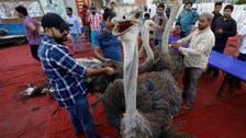 رمضان کی برکت:کراچی کے غریب روزہ داروں کی  ہرن اور شتر مرغ کے گوشت سے تواضع