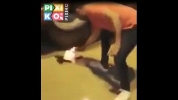 فيديو بشع لمصريين يحرقون قطة.. والأمن يتدخل