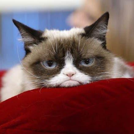 """رحيل """"غرامبي كات"""" أشهر قطة عابسة.. وهذه قصتها!"""