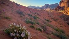 شمالی سعودی عرب کے 'جبال حسمیٰ' کا حسن وجمال!