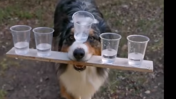 شاهد.. كلب ماهر في تحدٍ غير مسبوق!