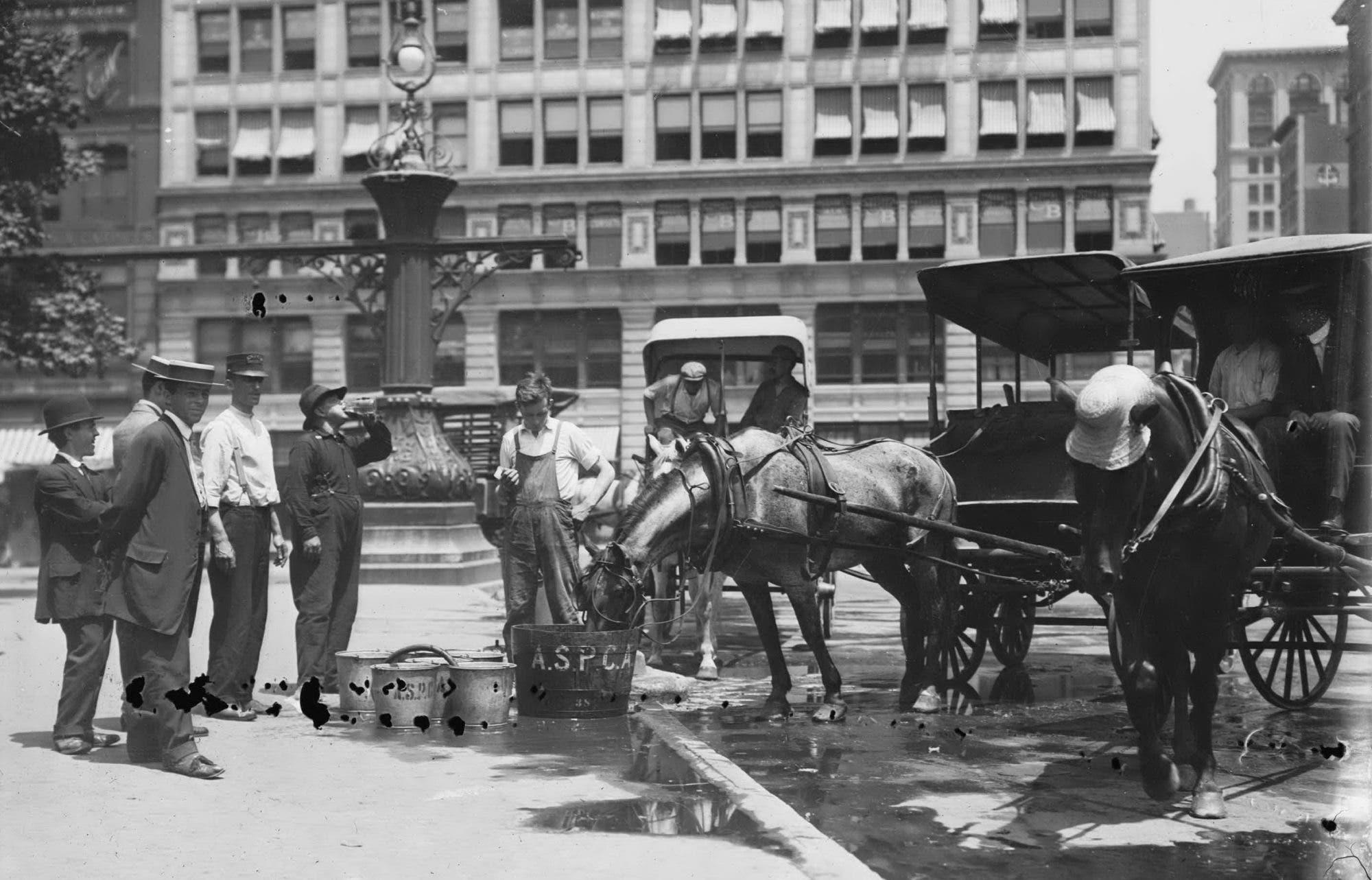 صورة لعدد من العمال وهم بصدد تقديم المياه لأحصنتهم لمجابهة موجة الحر لعام 1911