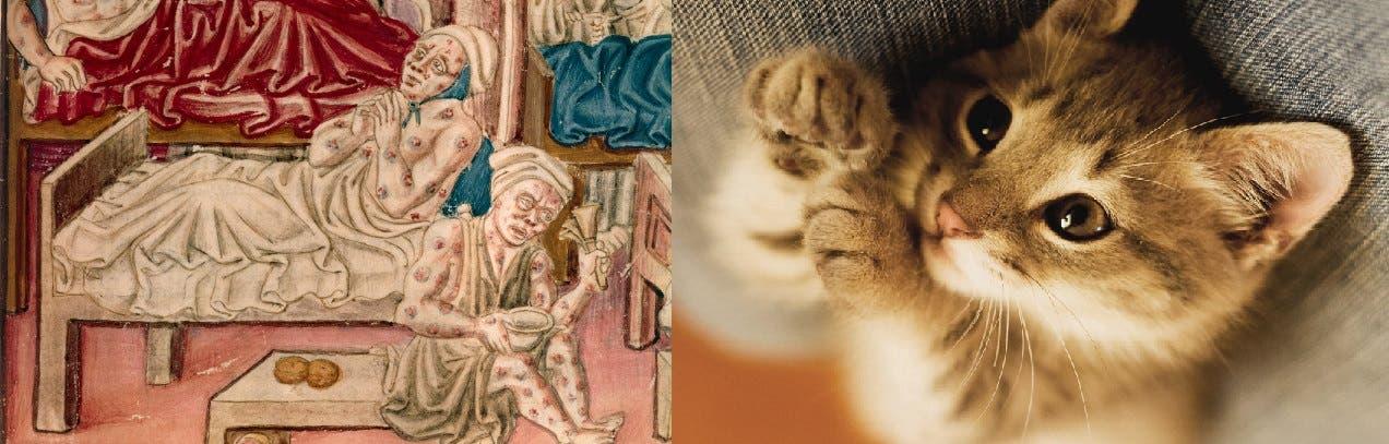 صورة تعبيرية لقط وعدد من مرضى الطاعون