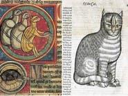 يوم أبادت أوروبا القطط فمات ثلث سكانها