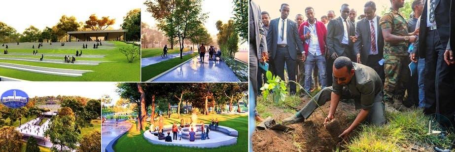 آبي أحمد يزرع شتلة من 4 مليارات يأملون أن تعيد إثيوبيا ريّانة خضراء، كالمبرج في الصورة الثانية