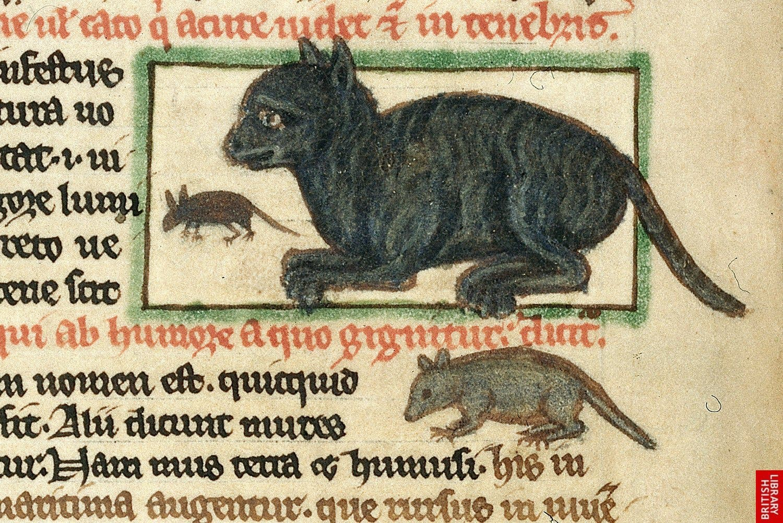 صورة لإحدى القطط بالقرون الوسطى