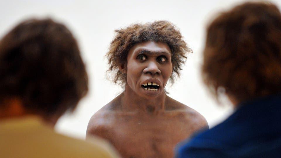 هل انقرض إنسان نياندرتال بسبب انخفاض معدل الخصوبة؟