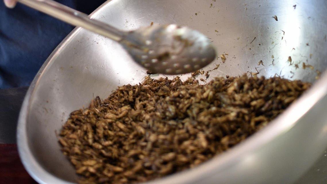 Mealworm - edible bugs - AFP
