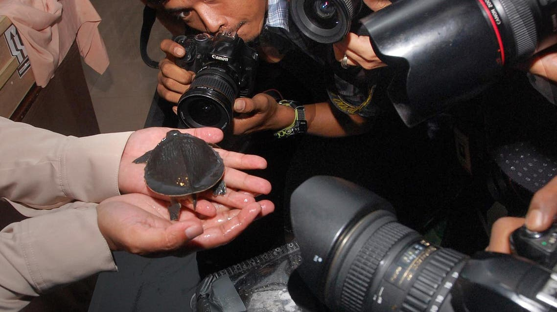 An Indonesian customs official displays a live turtle found in a cargo shipment at the Jakarta airport on October 5, 2011. (File photo: AFP)