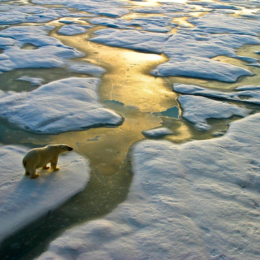 """العلماء يبحثون """"صناعة عصر جليدي"""".. لهدف نبيل"""