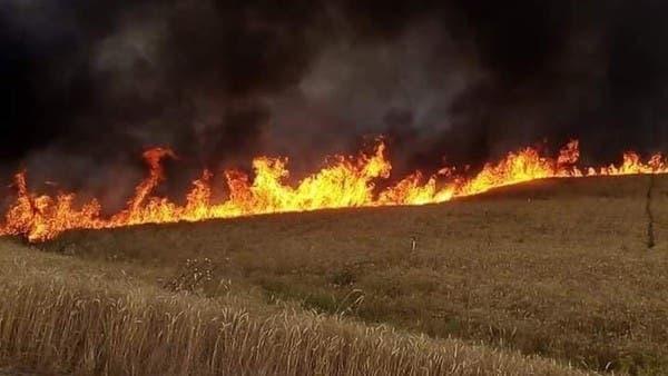 ما سر الحرائق الغامضة للمحاصيل بمزارع الموصل العراقية؟