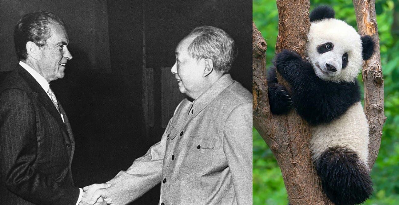 صورة تعبيرية إلي اليمين صورة لحيوان الباندا و إلى اليسار صورة للقاء ماو تسي تونغ و ريتشارد نيكسون