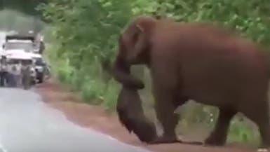 """فيديو مؤثر.. أفيال في مسيرة """"وداعية"""" لجثة صغيرها"""