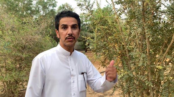 بعد 6 سنوات من التجارب.. سعودي ينجح بزراعة شجرة البخور