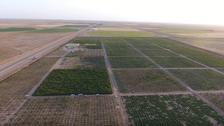 مزارعو القصيم يحولون الصحراء لواحة تنتج 6 أنواع من الفواكه