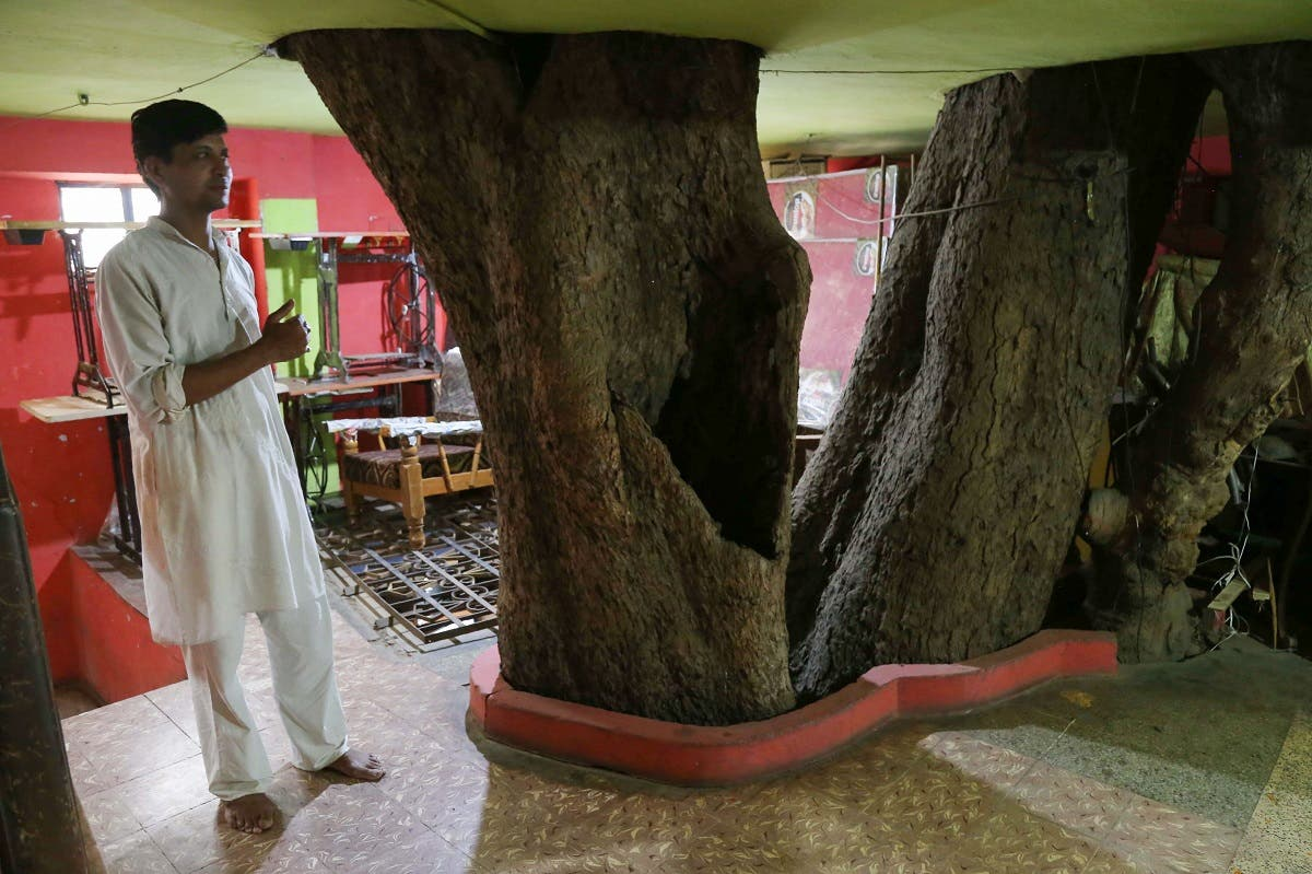 Yogesh Kesharwani, the son of Moti Lal Kesharwani who built the house around a peepal tree (sacred fig tree), stands on the first floor of their home in Jabalpur. (AFP)
