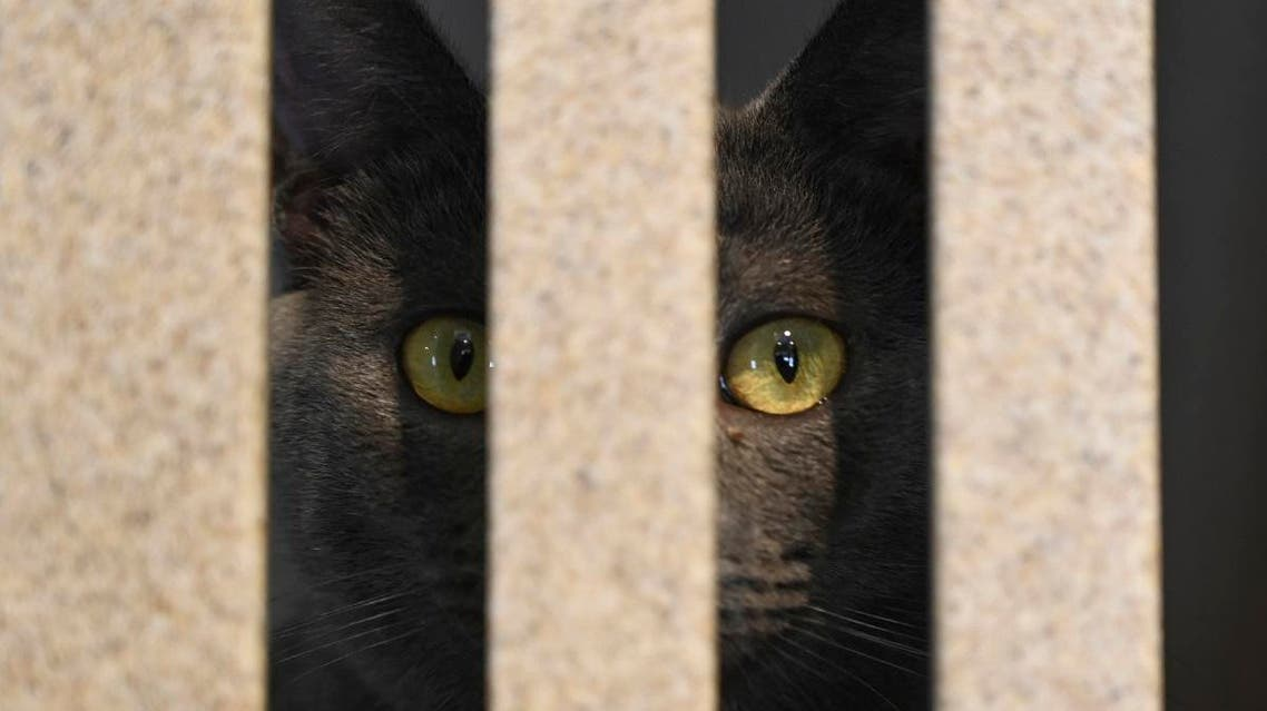 Cat. (AFP)