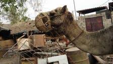 حوثی ملیشیا کی دہشت گردی سے بے زبان جانور بھی غیرمحفوظ