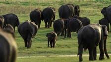 Elephant, rhino populations rebounding in Tanzania after anti-poaching crackdown