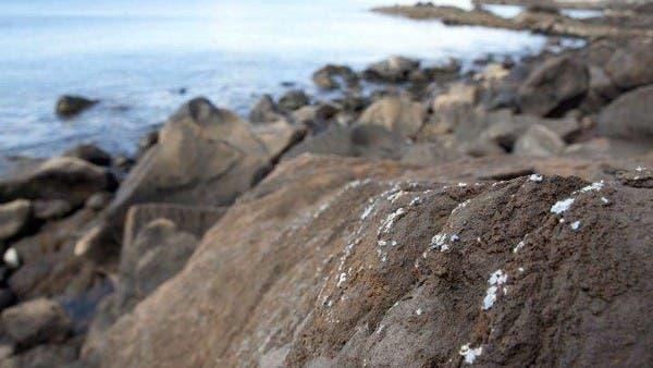 قشرة من البلاستيك تغطي الصخور على ساحل جزيرة برتغالية