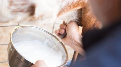 دراسة.. حليب الماعز يعزز صحة أمعاء الرضع