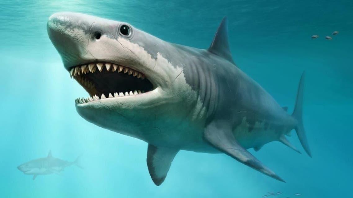 کشف دندان کوسه منقرض شده دوران پیش از تاریخ