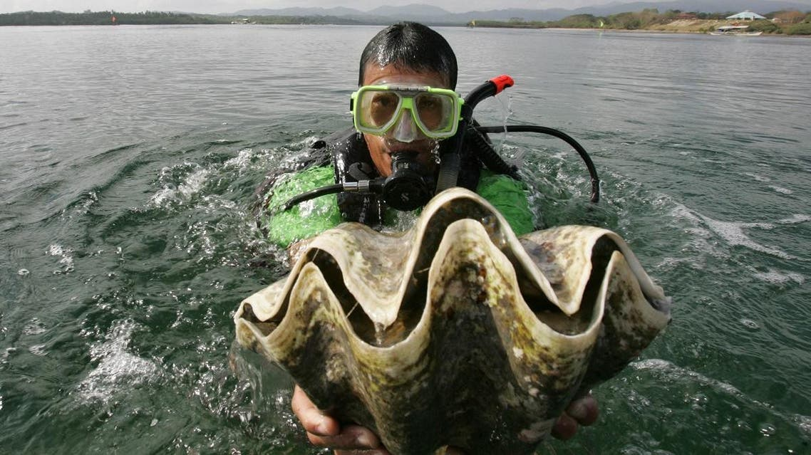 """A diver holds a giant clam, locally known as """"Taklobo,"""" prior to releasing the giant shellfish into the waters of Puerto Princesa city. (AP)"""