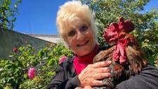 فرانس: مُرغ کی بانگ کے خلاف پڑوسیوں کا مالکن پر مقدمہ