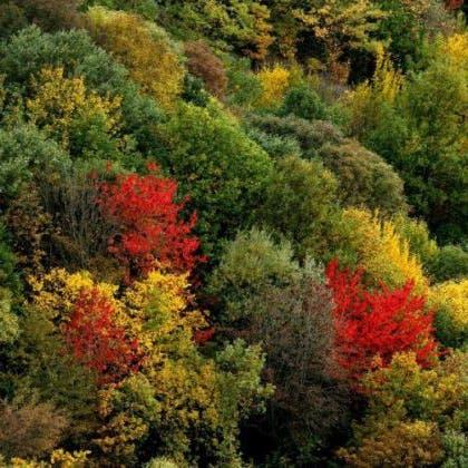 غابات هيركاني الإيرانية على قائمة اليونسكو للتراث الطبيعي