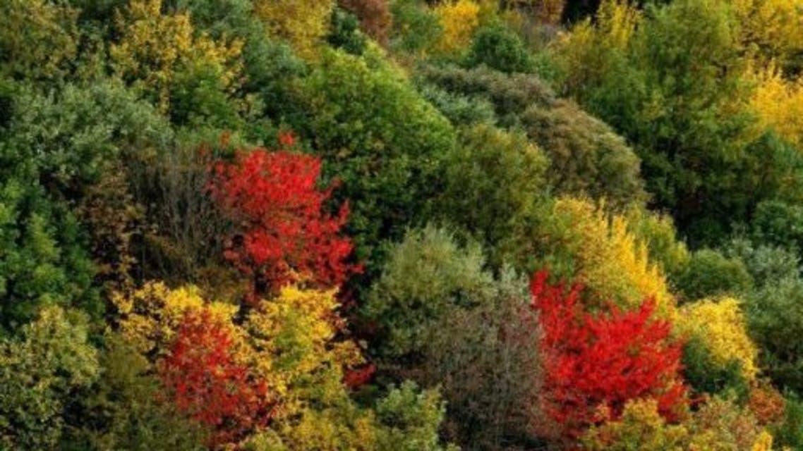 vzdsdm غابات هيركاني الإيرانية