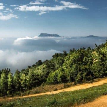 نحو 30 بالمئة من أنواع الأشجار في العالم معرضة للانقراض