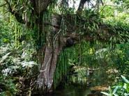 إزالة الغابات واختلال المناخ ضربة قاصمة للأنواع البرية