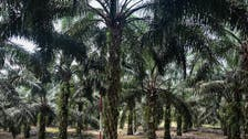 Malaysia to challenge EU palm oil curbs at WTO