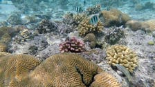 Mexico announces discovery of five unknown reefs in Gulf