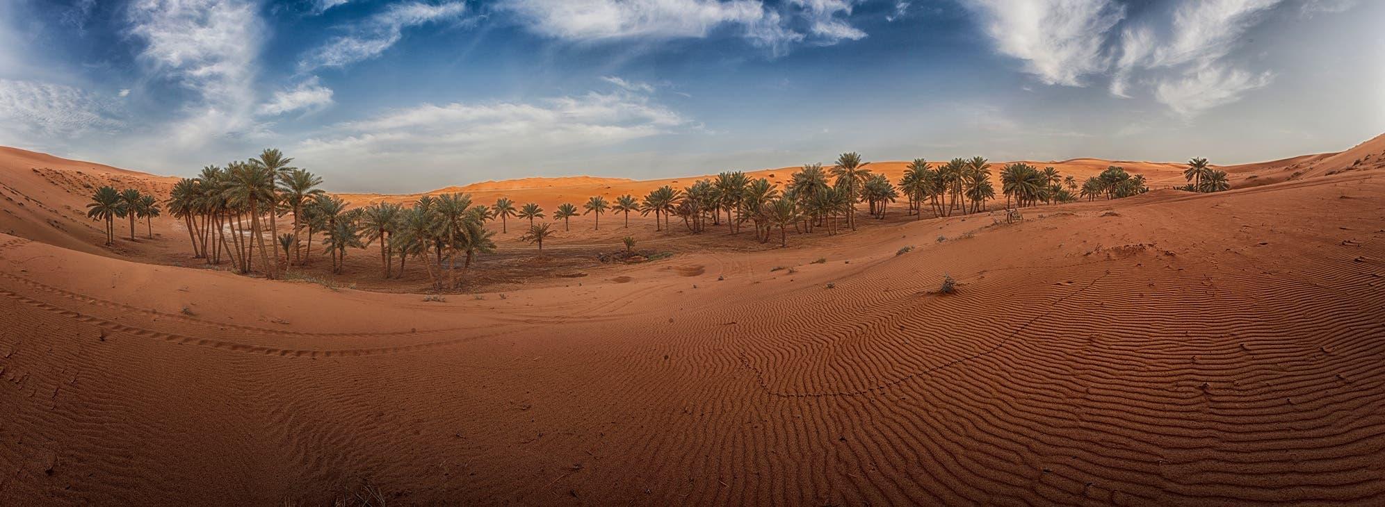 واحة نابضة وسط الصحراء