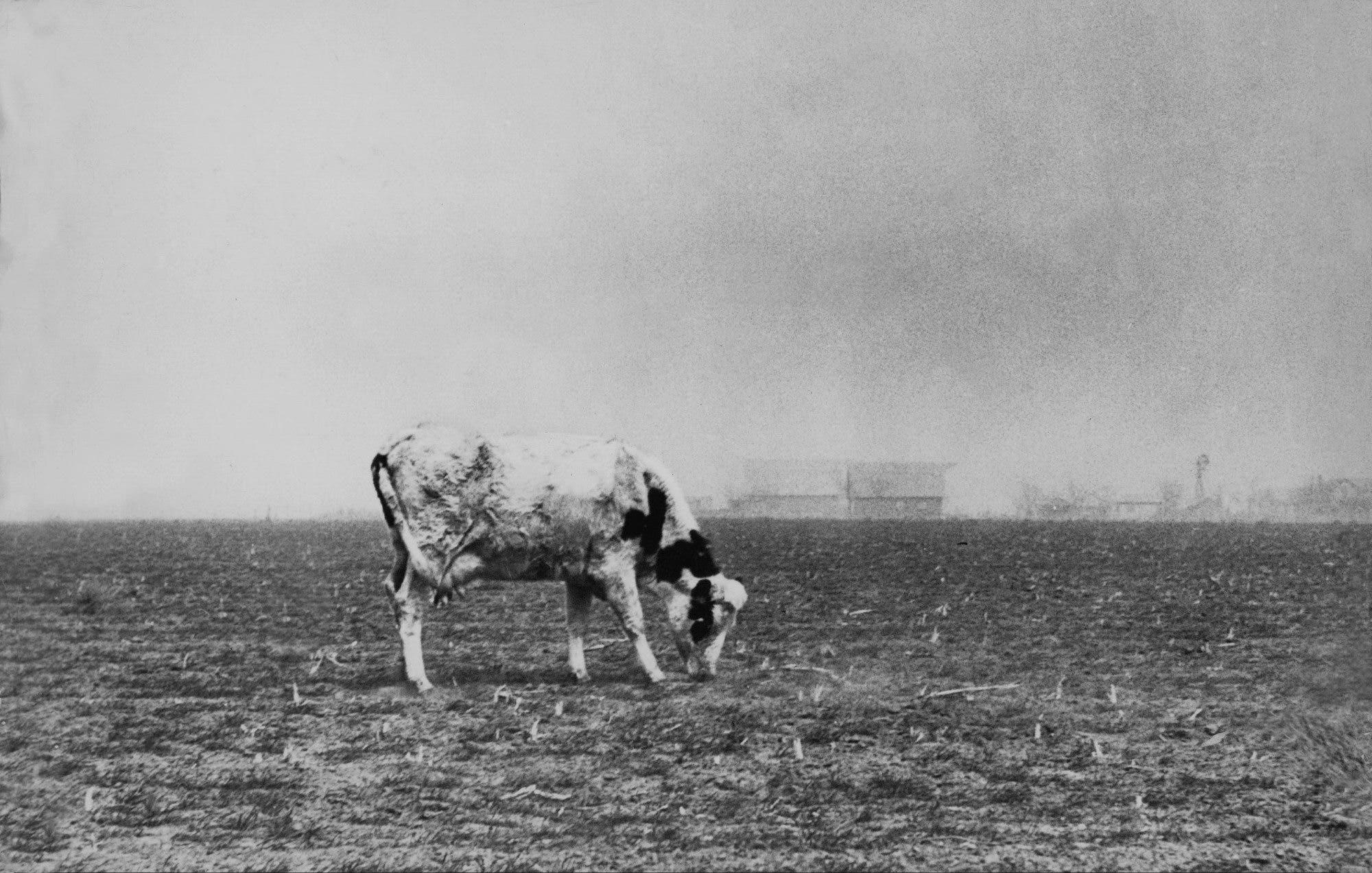 صورة تجسد موسم الحصاد السيئ عام 1936 بسبب موجة الحر
