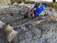 عظمة ديناصور عملاق في جنوب غرب فرنسا