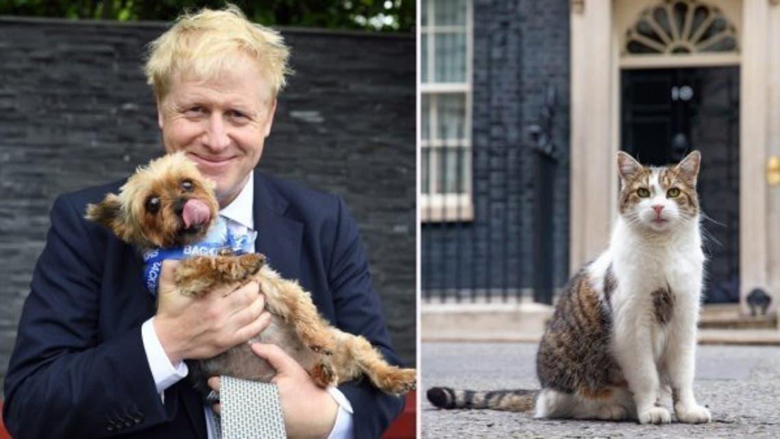 جونسون يحب الكلاب ولاري أصبح مهددا
