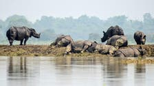 Battle to rescue wildlife at India's flood-hit animal park