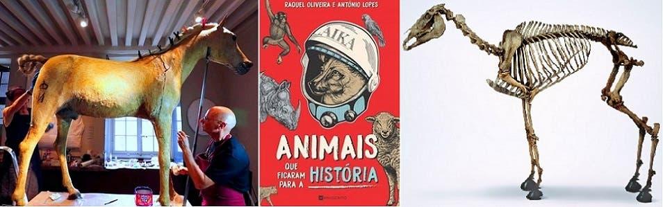 غلاف الكتاب بين هيكل الحصان العظمي بلندن والمحنط في باريس