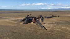 Whales die in new mysterious Iceland stranding