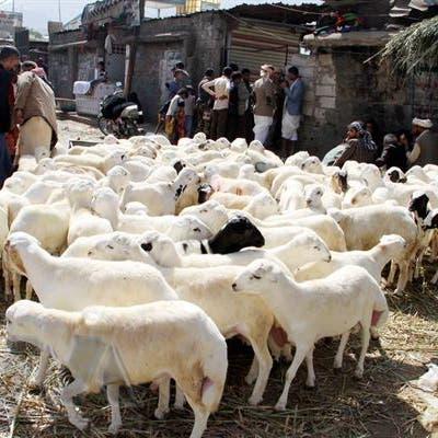 اليمن.. ميليشيات الحوثي تفرض رسوماً على أضاحي العيد