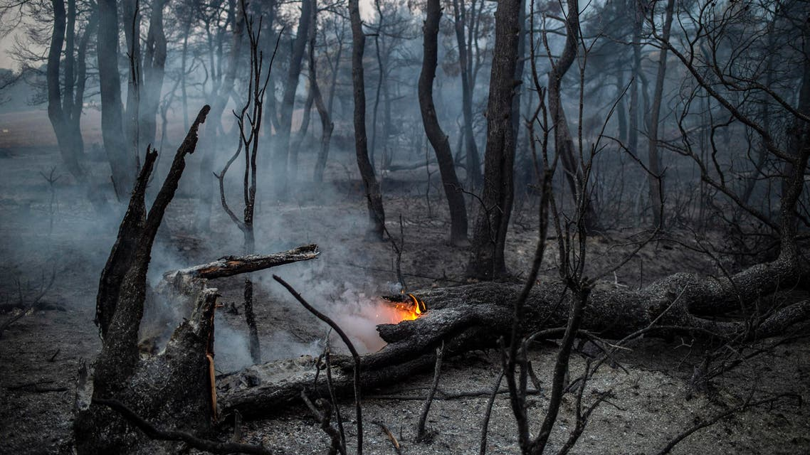 The trunk of a tree burns following a wildfire near the village of Makrimalli on the island of Evia, northeast of Athens, on August 14, 2019. (AFP)