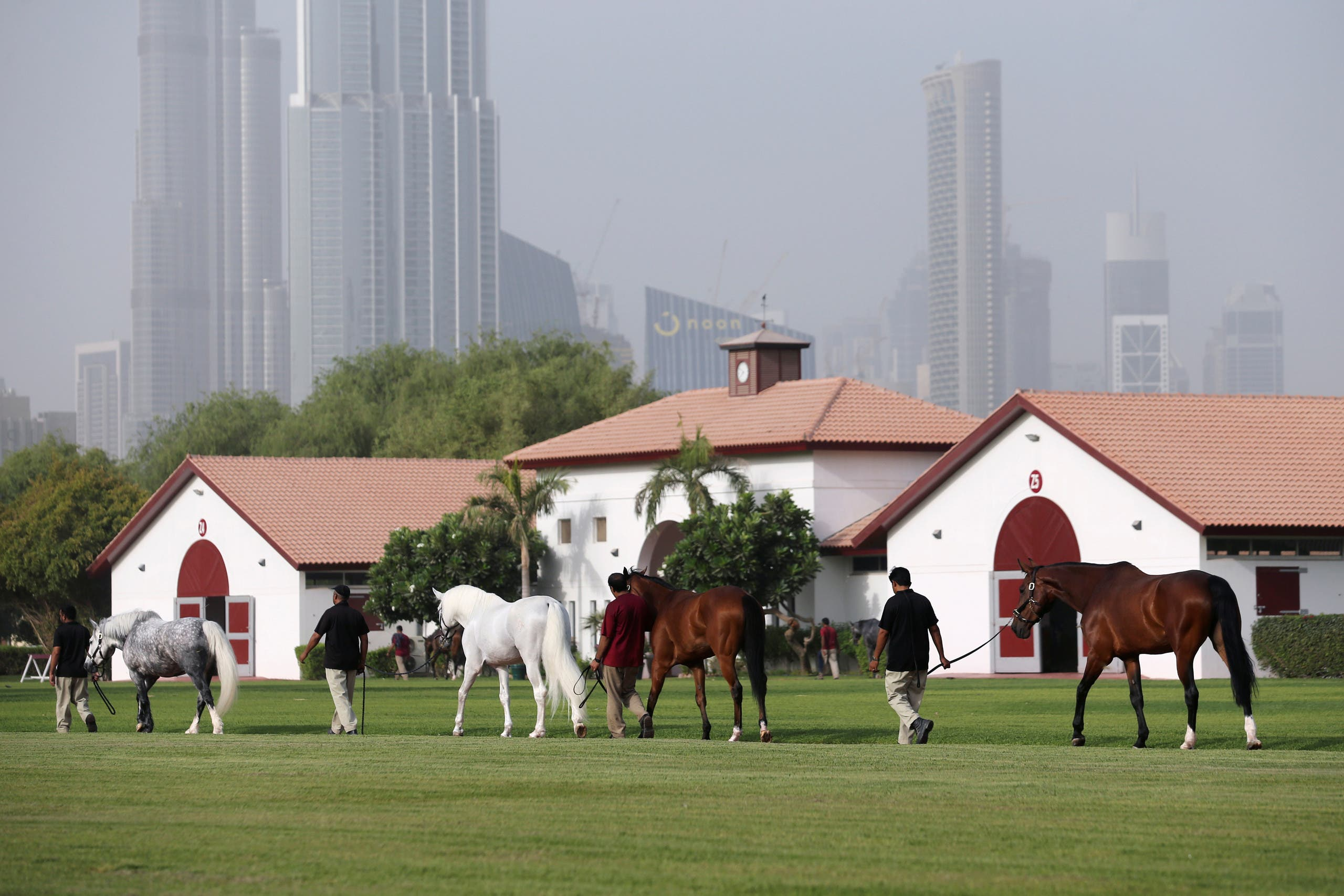 Horses take exercise at Dubai's Zabeel Stables, which offer equine cryotherapy, surrounding the horse in cold nitrogen mist, in Dubai, UAE August 18, 2019. Picture taken August 18, 2019. (Reuters)