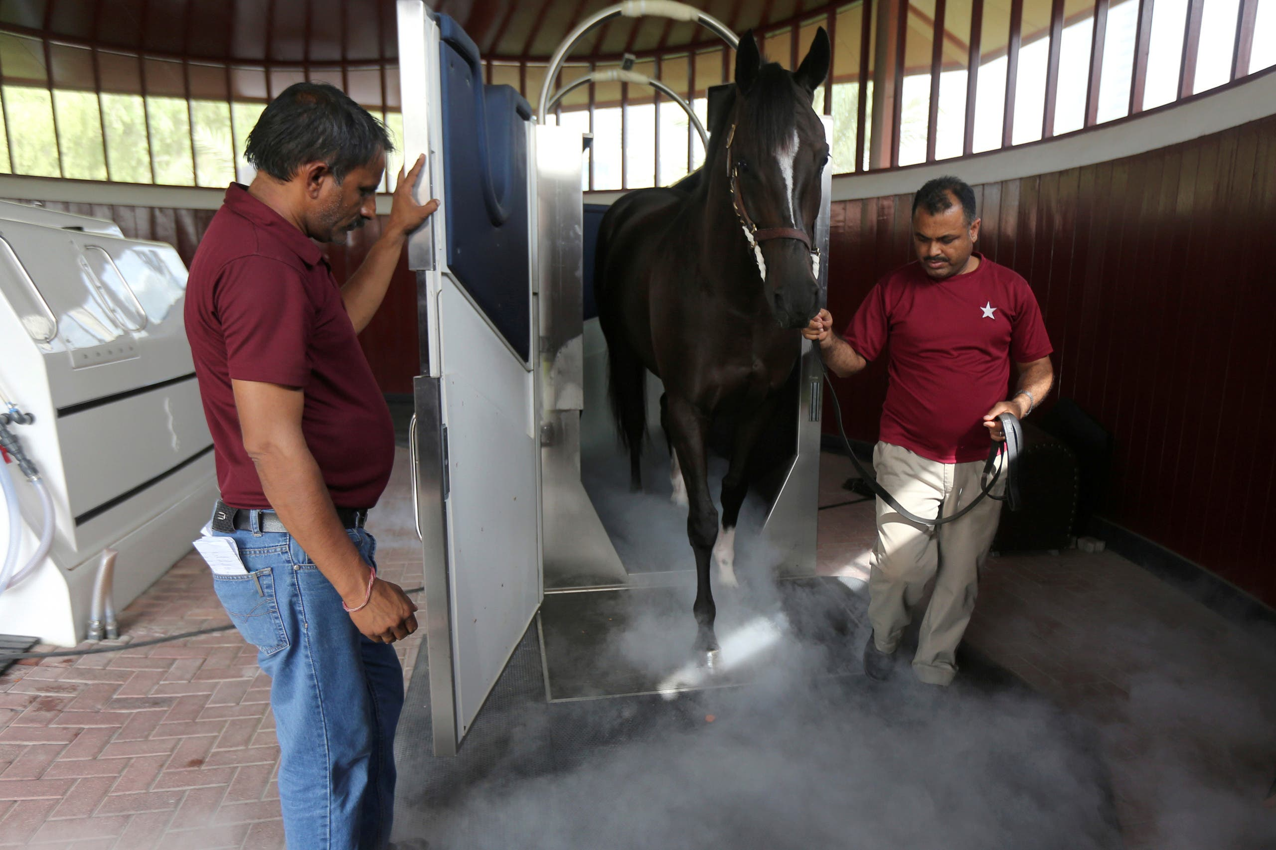 Grooms guide a horse after a cryotherapy session, which surrounds its body in cold nitrogen mist, at the Zabeel Racing Stables in Dubai, UAE August 18, 2019. Picture taken August 18, 2019.(Reuters)