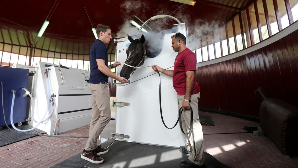 Luka Jurkovic, General Manager of Revive Cryotherapy (L) positions the horse properly while it undergoes a Cryotherapy session, which surrounds its body in cold nitrogen mist, at the Zabeel Racing Stables in Dubai, UAE August 18, 2019. Picture taken August 18, 2019. (Reuters)