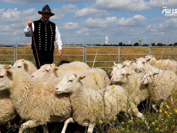 مزارعو بريطانيا يسابقون الزمن لبيع محاصيلهم قبل بريكست
