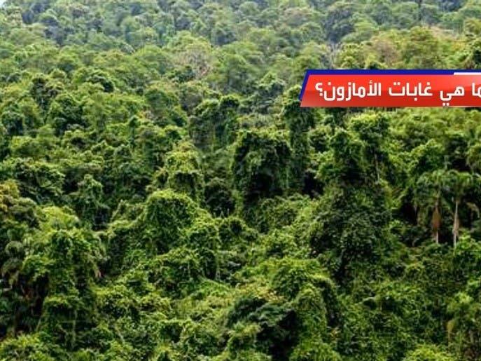 ما هي غابات الأمازون؟