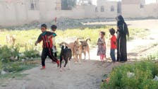 الكلاب الضالة تشارك الحوثي في قتل اليمنيين